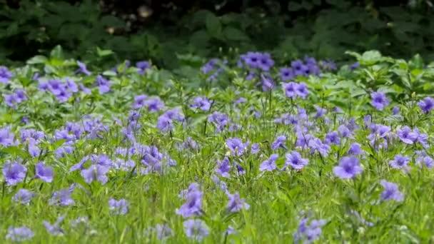 Violet flower in field.