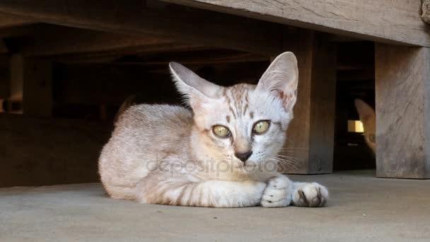 těsný kočička upclose