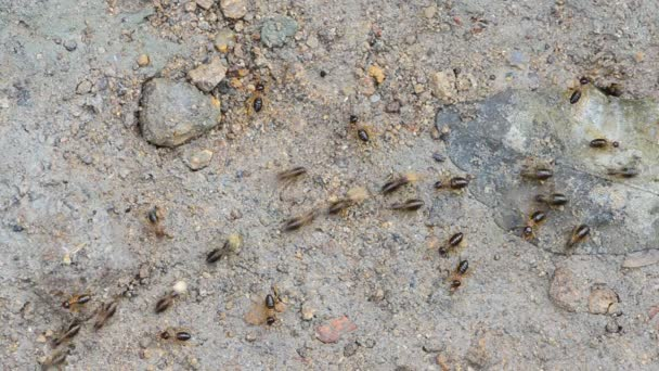 Worker Termites Walking Ground Tropical Rain Forest Stock Video C Chatchai 183290226