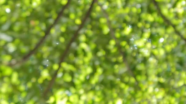 Krásná bokeh stromu v pohybu, abstraktní a pozadí. Real time 4k Rozlišení video záběry.