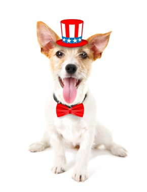 Cute dog with Uncle Sam hat and bow-tie on white background. USA holiday concept.