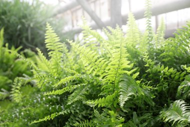 Close up view of ferns in greenhouse