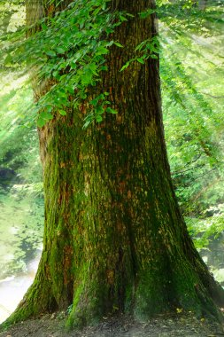 Tree trunk in green forest