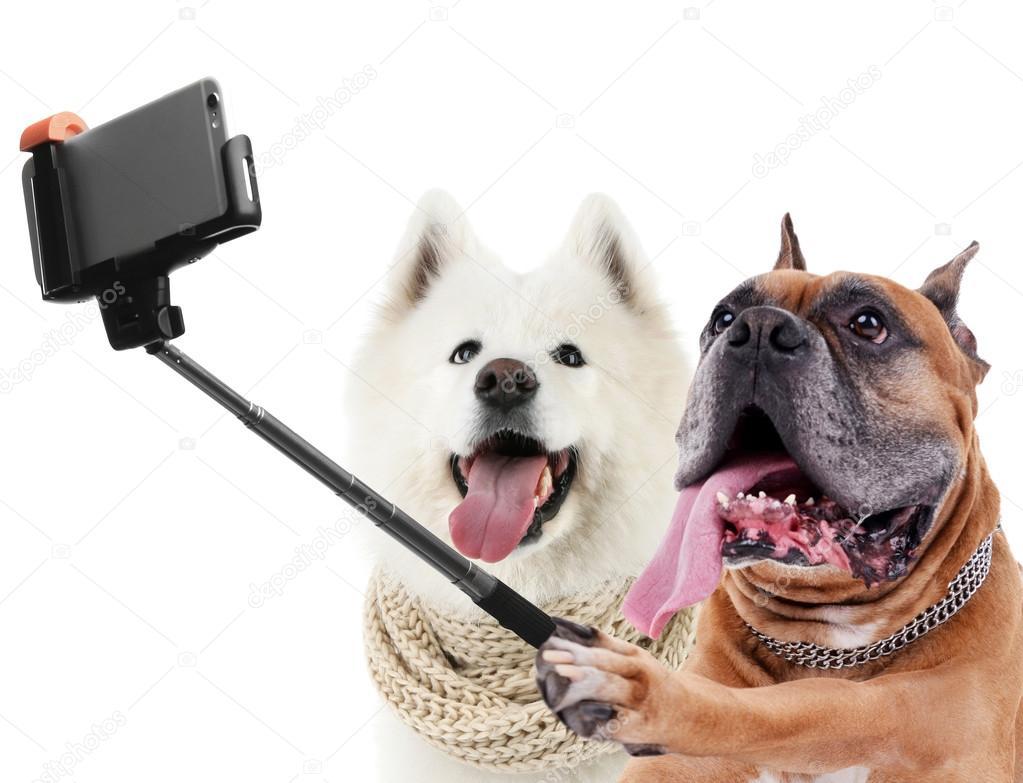 Resultado de imagen para perros divertidos