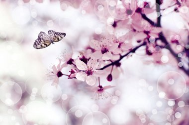 Beautiful butterfly flying in spring garden on beautiful bokeh background