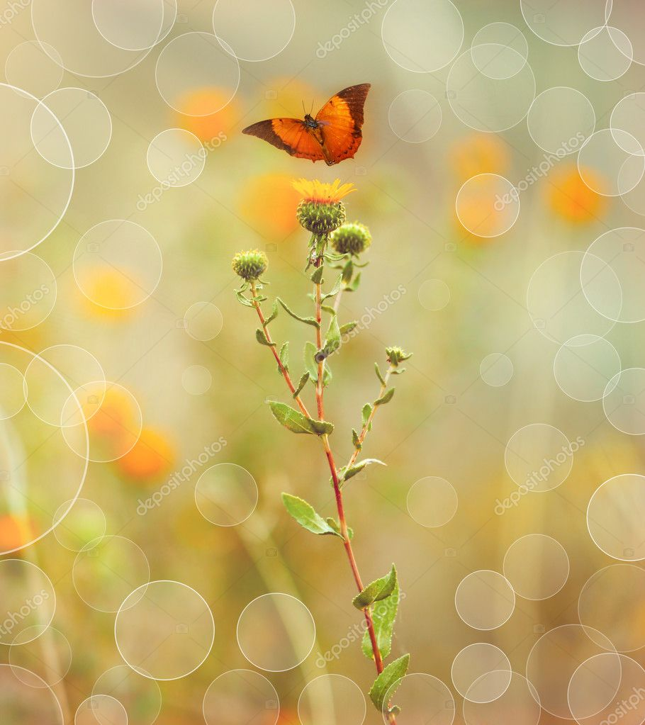 Butterfly flying in field among flowers on beautiful bokeh background