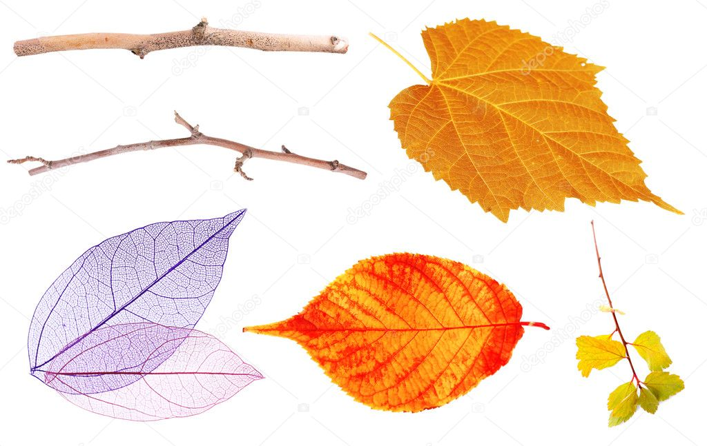 Set of autumn leaves isolated on white