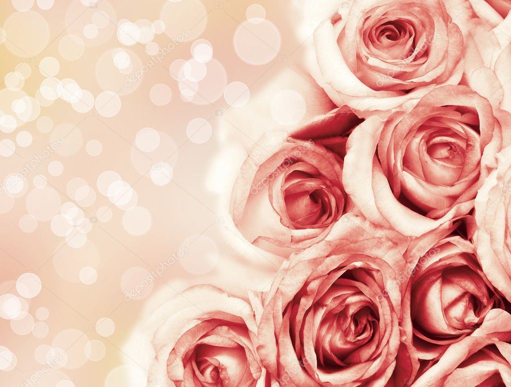 Beautiful Roses Flowers On Beautiful Bokeh Background With Color