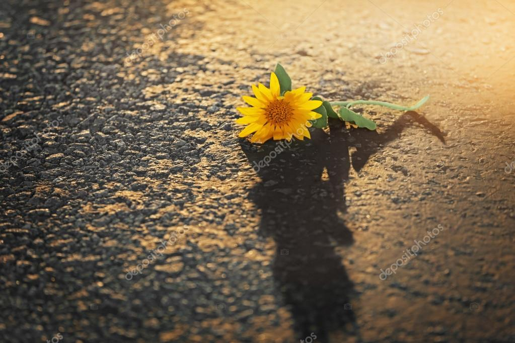Beautiful sunflower on asphalt background