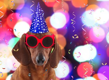 Dachshund in stylish sunglasses and party hat on festive background