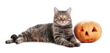 tabby cat with Halloween pumpkin