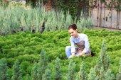 Hezká mladá zahradník starat jalovec ve skleníku
