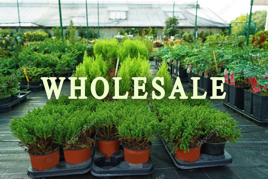 Tuin Potten Groothandel : Groothandel concept verschillende conifer bomen in potten