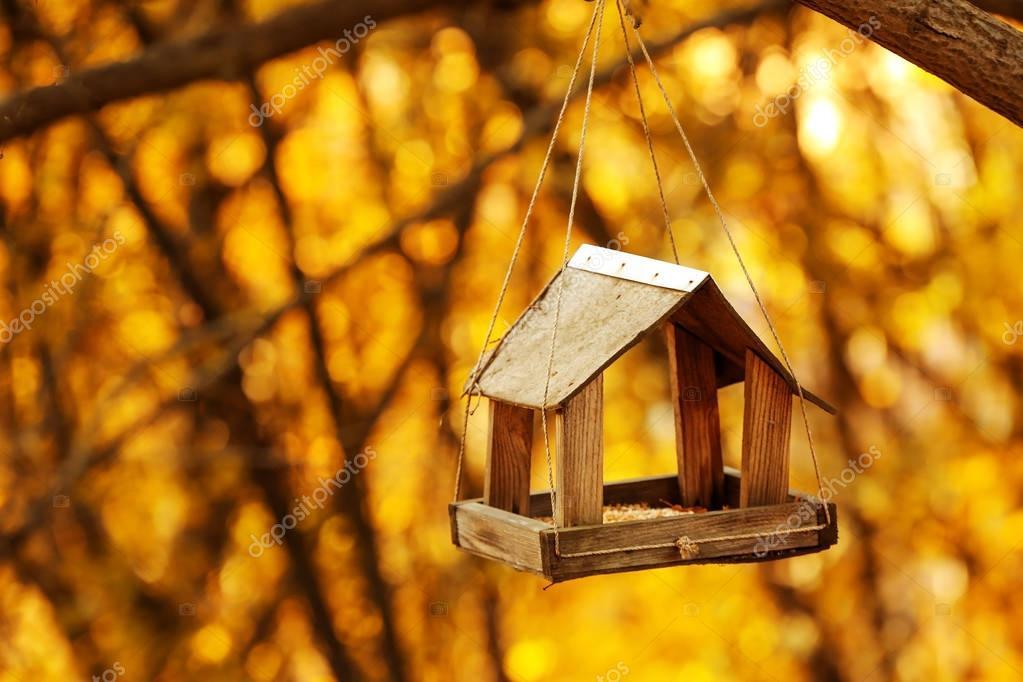 Bird feeder hanging on tree