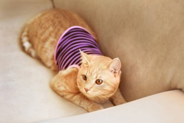 Funny cat in clothes