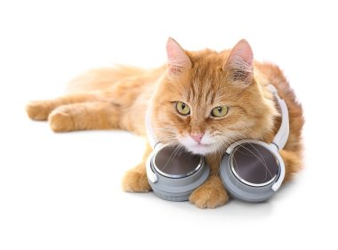 Cute ginger cat with headphones
