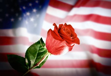 Rose on USA flag background