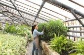 Hezká mladá zahradník hledá po aloe ve skleníku