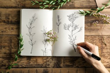 hand drawing plants