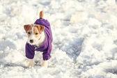 Photo Cute funny dog