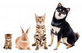 Fotografie Cute friendly pets