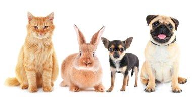 Cute friendly pets