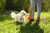 Frau treffen Hundehaufen