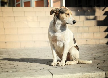 Homeless dog on street
