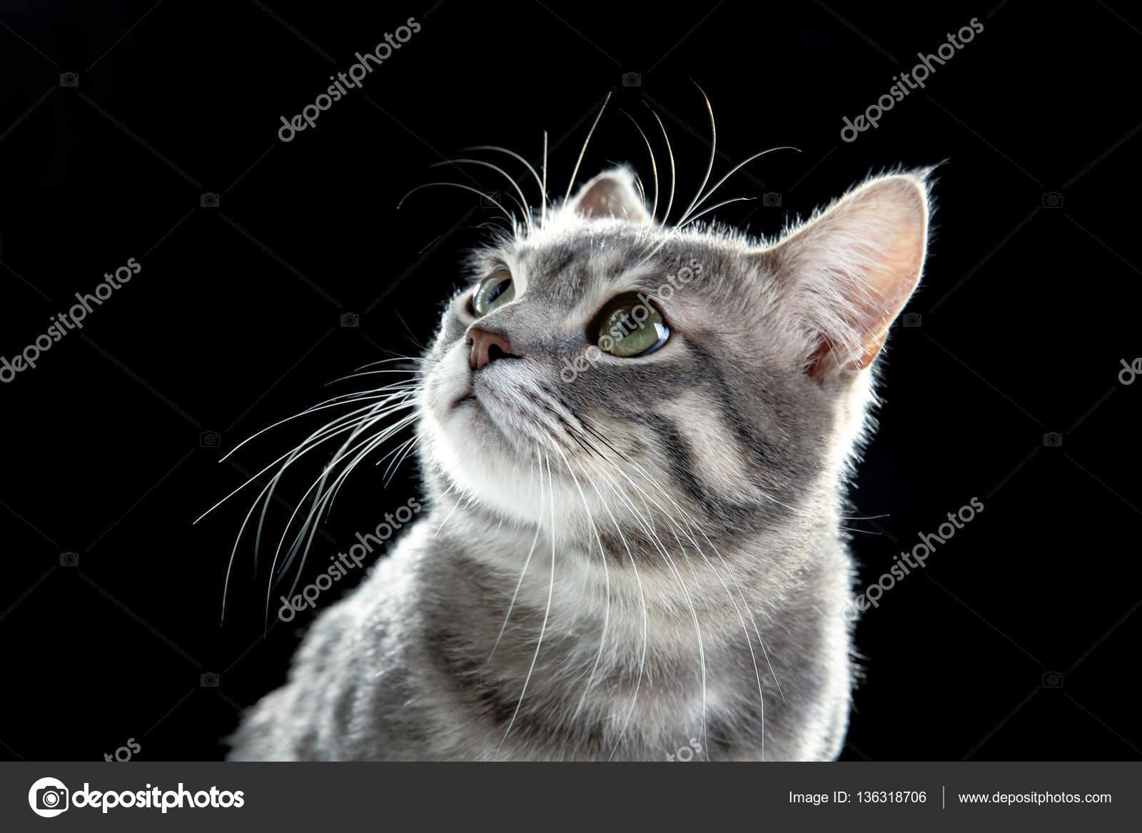 Cute funny cat — Stock © belchonock