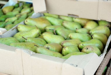 Cardboard box with juicy pears