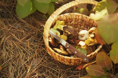 Wicker basket with mushrooms