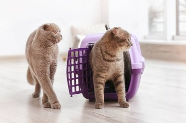 Cute funny cats playing with plastic carrier