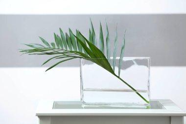 Green branch in vase