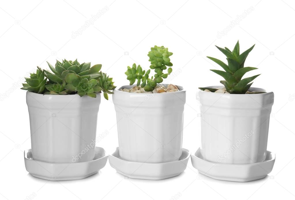 small Houseplants in row