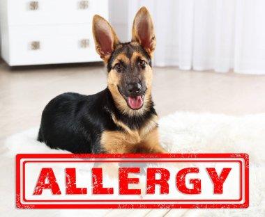 Animal allergy concept