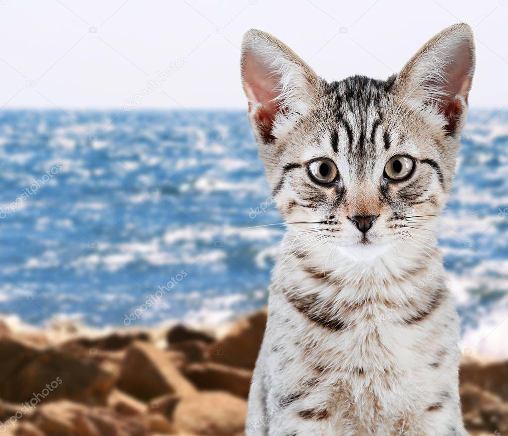 Cute kitten on seashore