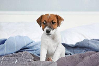 Cute funny puppy