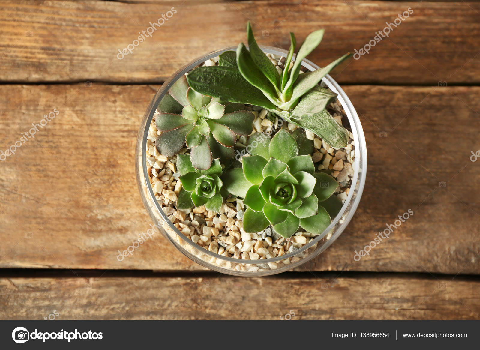 Composizioni In Vetro Piante Grasse : Composizione di piante grasse in vaso vetro — foto