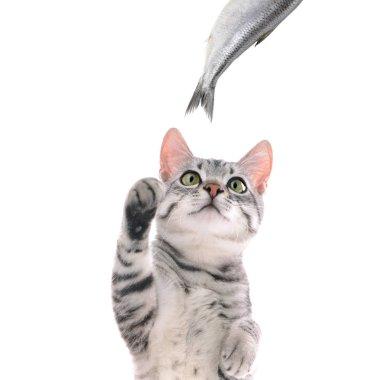 Cute cat and fish