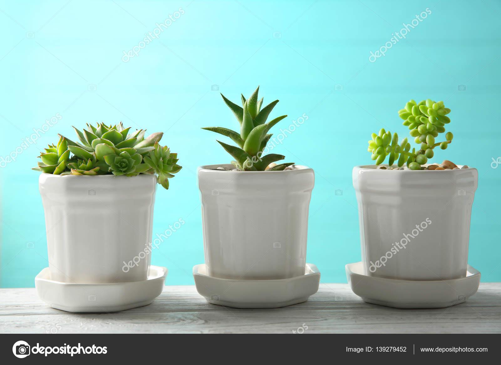 Vasi con piante grasse sulla tabella foto stock - Vasi con piante grasse ...