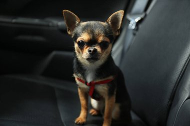 Dog sitting in a car seat