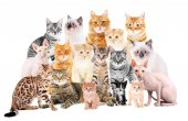 Fotografie Group of cute cats