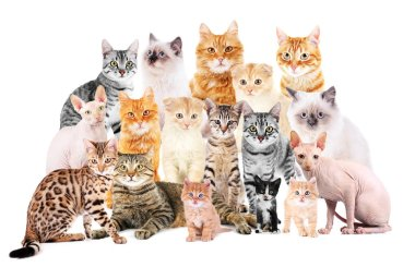 Group of cute cats