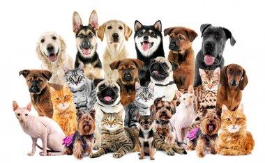 "Картина, постер, плакат, фотообои ""группа милых домашних животных "", артикул 139926842"