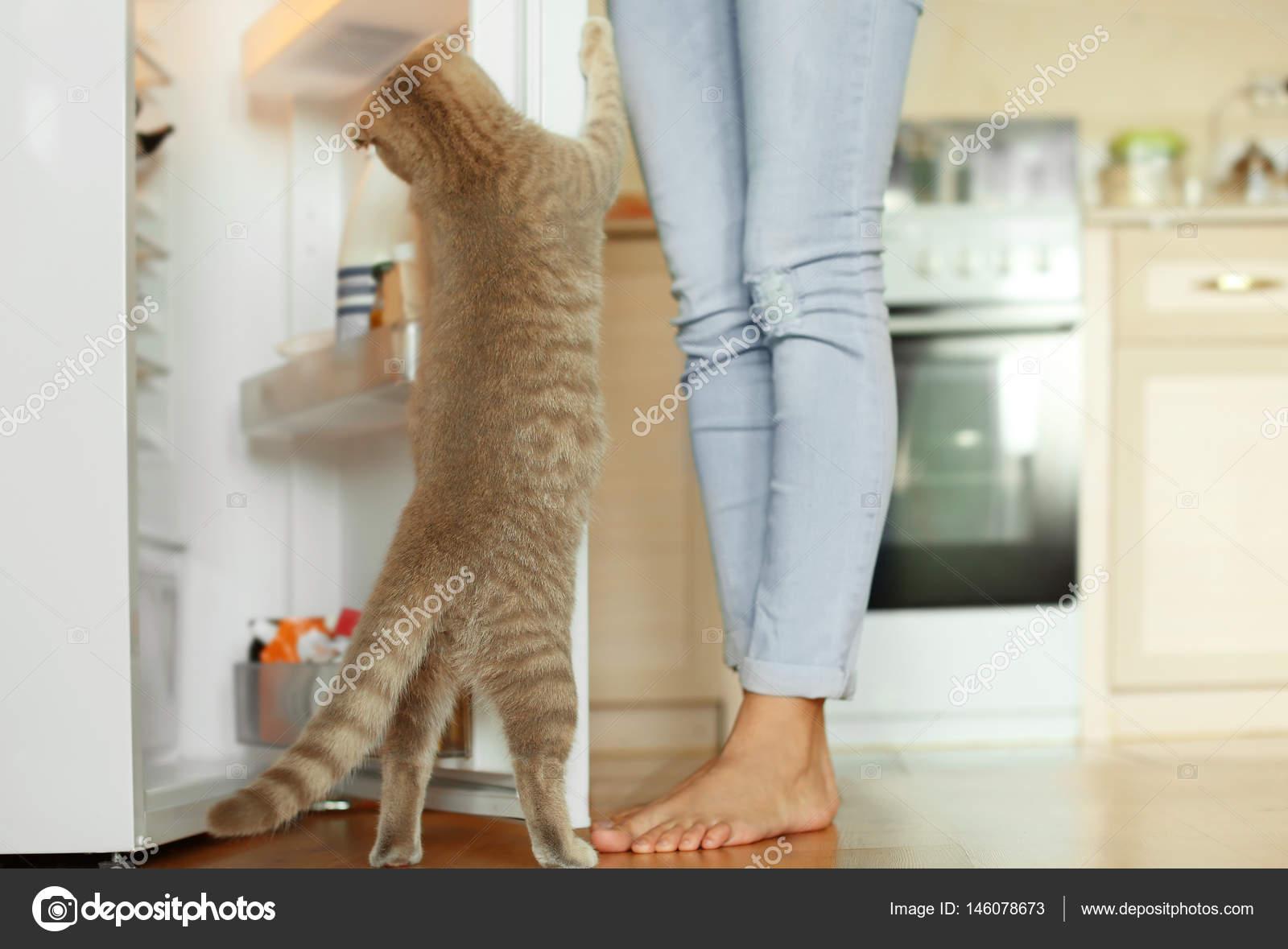 neugierige Katze, die auf der Suche in Kühlschrank — Stockfoto ...