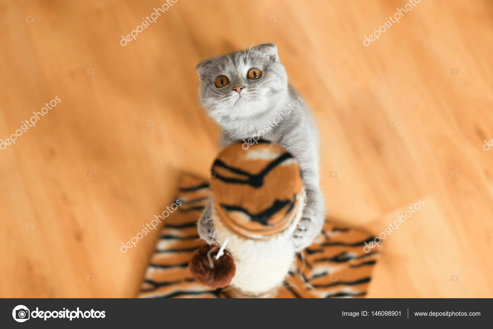 Коты заточка