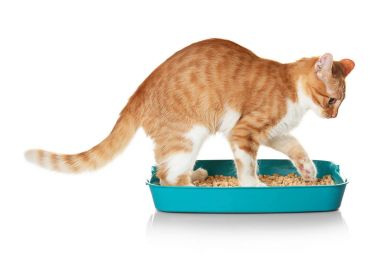 cat in plastic litter