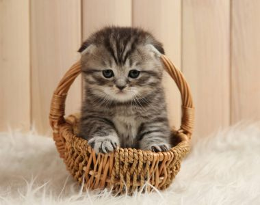 Cute kitten at home
