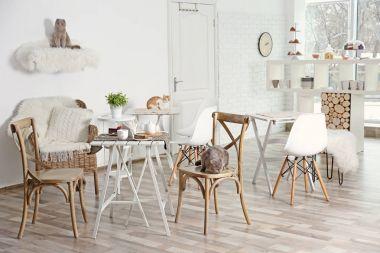 modern cat cafe