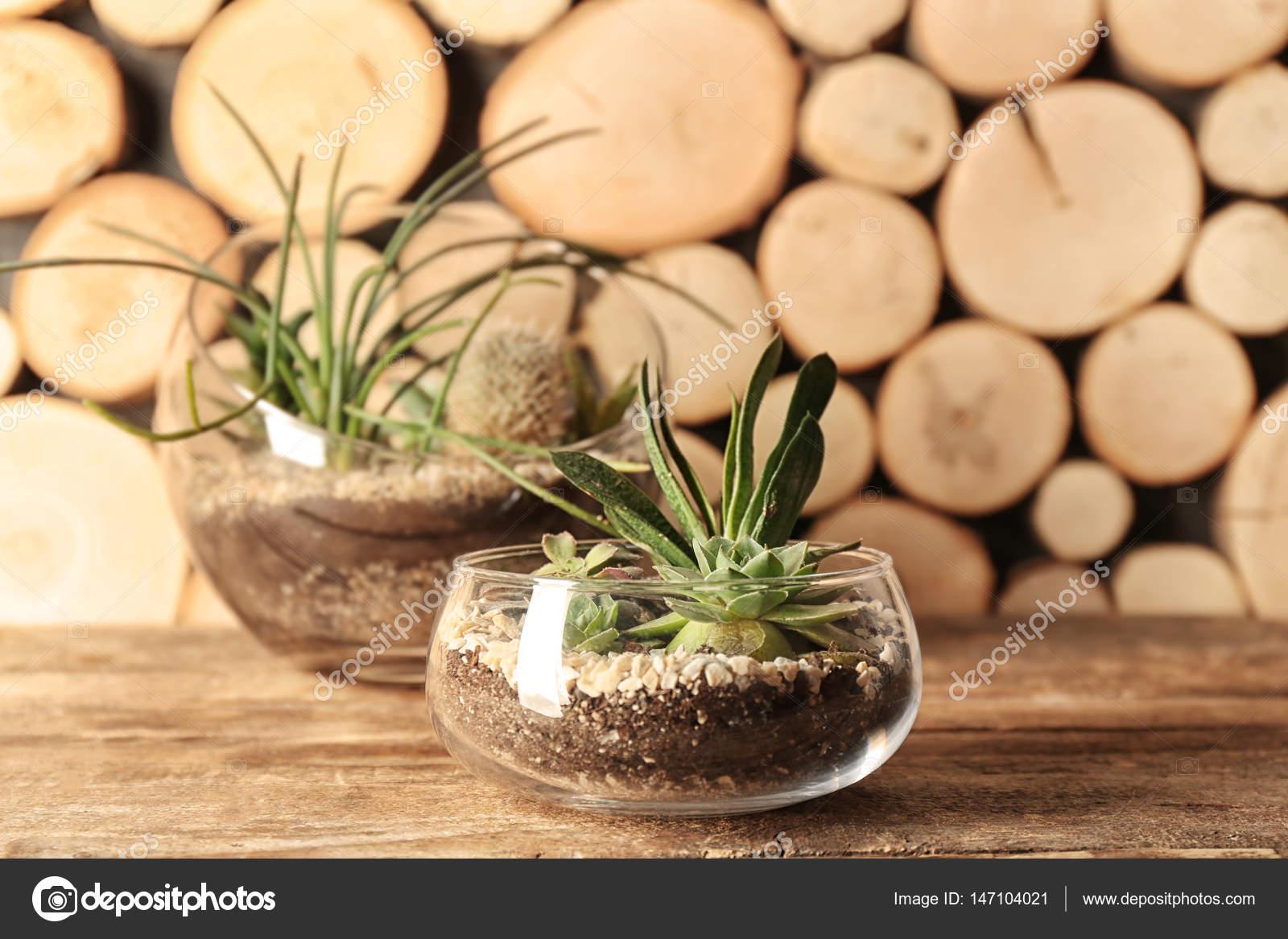 Composizione Piante Grasse In Vaso Di Vetro.Vasi Di Vetro Con Piante Grasse Foto Stock C Belchonock 147104021